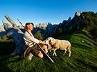 Ovce na Strelovcu